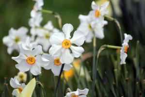Narcissus 2 by CASPER1830