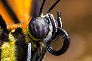 Buttefly Portrait by Zx30
