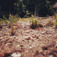 ~Miniature Wasteland~ by Belynx16