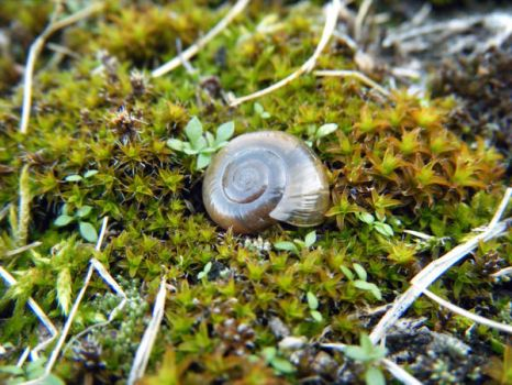 Exploring Terra Photo - Snail Shell by akaLOLCat