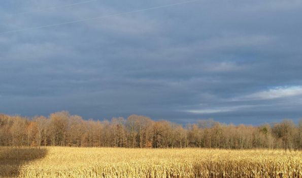 Galway, NY afternoon cornfield by Frank-Hoerauf