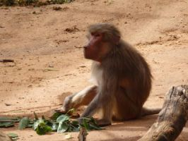 Baboon by CrystaltheEchidna
