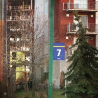 lucky number 7 and the friendly trees by Izaaaaa