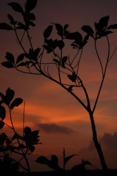 the silhouette of a tree by ben-hur