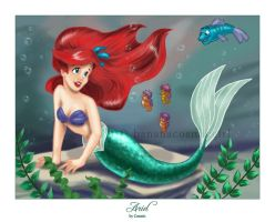 The Little Mermaid by bananacosmicgirl