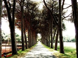 Tree-lined road by oneXsulfur