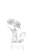 the orchid in black white by tzumii