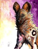 Wild Dog in Acrylics by sebastiangreyfox