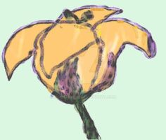 Tulip Lily by HCShannon
