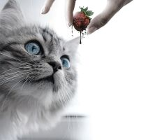 One Cat,One Fruit,One Clock by Amok-Studio