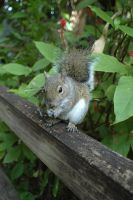 Squirrel by angiers