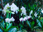 Orchids 1 by digitalKATALY5T