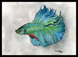 Unnamed Betta by M-Everham