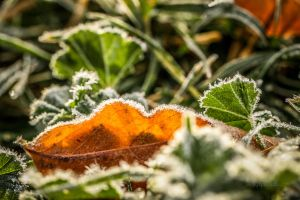 Morning Fall Frost by Kaptive8
