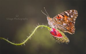 le Papillon by GJ-Vernon