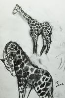 Zoo sketches: Giraffes 2 by ziksan