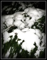 Snow On Tree2 by roxyms