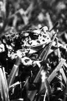 Hello to the Toad. by pettytayler