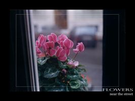 Flowers near the street by lotus82