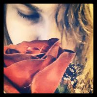 Red Rose 7 by Jessi-element