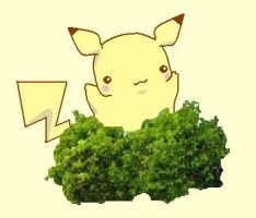 a wild pika appeared by racotaco