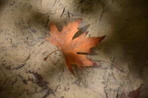 Autumn Leaves by AmmarkoV1