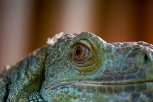 Iguana seeing red by DeviantTeddine
