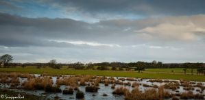 Wetland view by SnapperRod