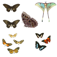 1800's Insects 28 PNG by chaseandlinda