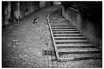 street cat by lajosz