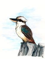 Waiting kookaburra by DrimmsyDra