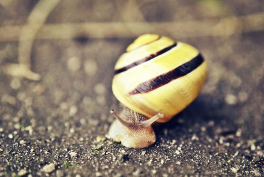 Snail by onecherry