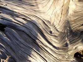 Texture - wood 5 by SanStock