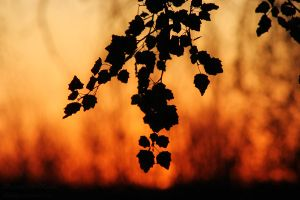 - Autumn Silhouette - by relisabby