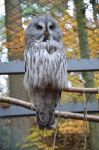 great owl by mimose-stock