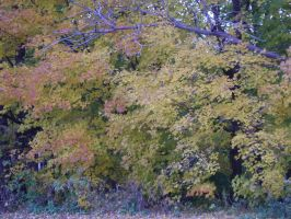 Canadian Fall Colours 46 by Aswang301