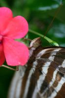 Butterfly Photo 27 by blookz