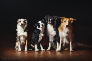 Border Collie Company :) by Ksuksa-Raykova