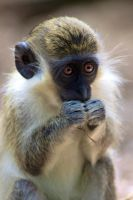 Monkey Snack by SycamoreHeart