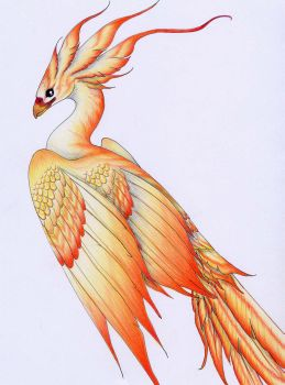 Firebird by verreaux