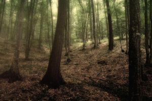 Forrest 2 by violety