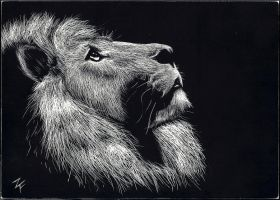 A Lion's Stare by Illiterate-Artist