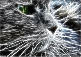 Mystical Cat by RiegersArtistry