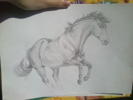 Traditional Horse Drawing june '13 by Syhne