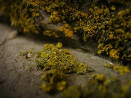 Lichens on Stone by Wormed