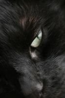 Cats Eye by RaeyenIrael-Stock