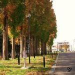 Line of fall trees by Tgyana