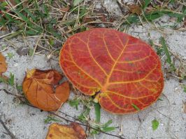 00109 - Red and Yellow Leaf by emstock