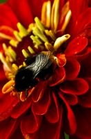 Busy bee by lizabif-f