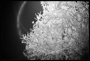 Halo and Hoarfrost by adriftphotography